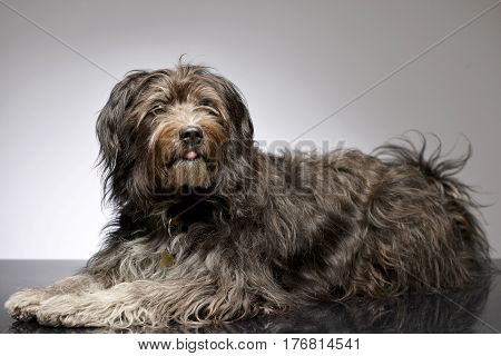 Studio Shot Of An Adorable Mixed Breed Dog