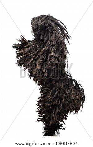 An Adorable Puli Standing On Two Legs