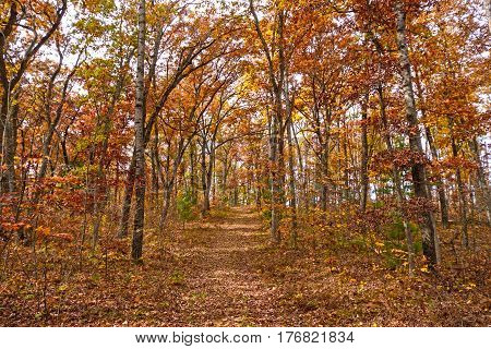Forest Path in the Fall in Black River State Forest in Wisconsin