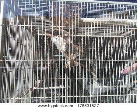 Pájaro grande dentro de grande jaula, encierro