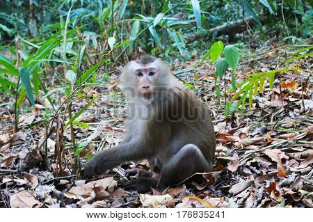 Travel to National Park Khao Yai Thailand. A monkey on the grass in the forest.