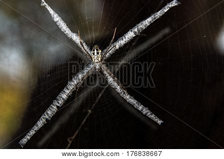 Spider webs on the x-shaped weird.close up