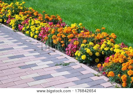 Flowerbed of different colors arranged along the edge of the green lawn and walkway of pavers. Flowers of different colors yellow orange pink and red. Pavers brown.