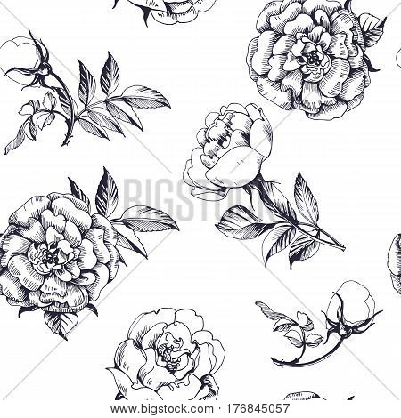 Seamless background with roseson a white background. Floral pattern . Vector illustration