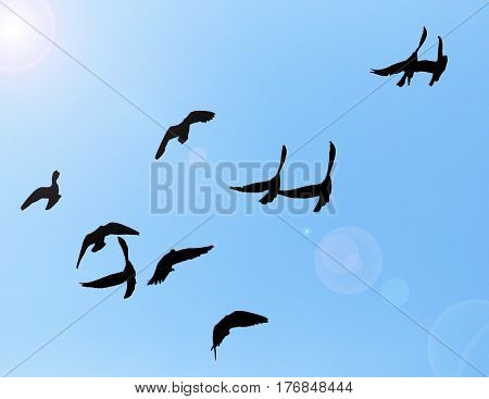 silhouette of a flock of pigeons on blue sky .