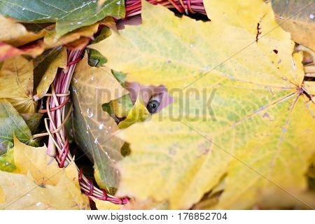 funny look inside fall yellow leaves garland