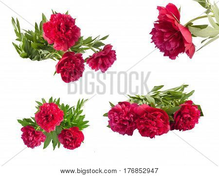 Set The Beautiful Bouquet Of Pink Peonies