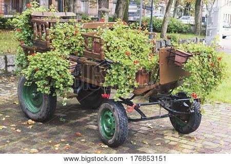 vintage four wheel cart arranged with many blossom home plants in hanging pots