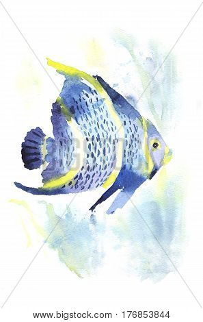 Exotic fish on white background. Watercolor tropical fish. Fish and sea weed.