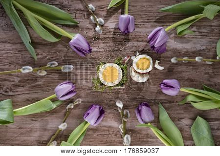 Cut egg in circle composition with purple tulips and willow twigs. View from above.