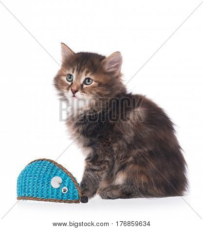 Cute little kitten caught toy mouse isolated on white background