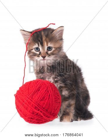 Cute little kitten with ball of red threads on white background
