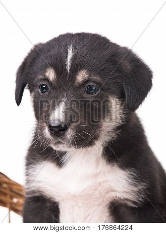 Cute little puppy with sad eyes isolated over white background