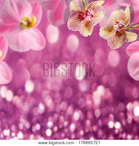 Beauty background of orchids flowers on pink