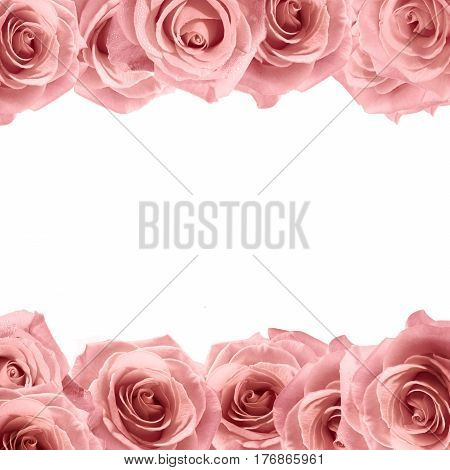 Fresh soft pink rose frame on white background. Wedding background.