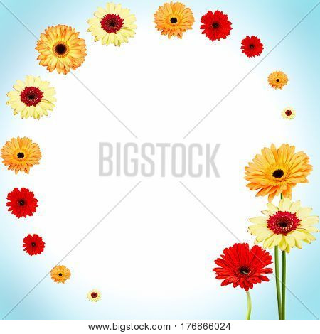 Abstract beauty background of gerber colorful flowers