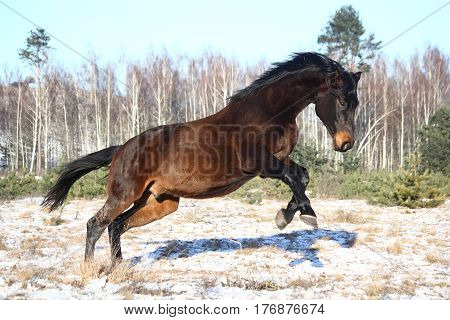 Black Horse Jumping In The Air