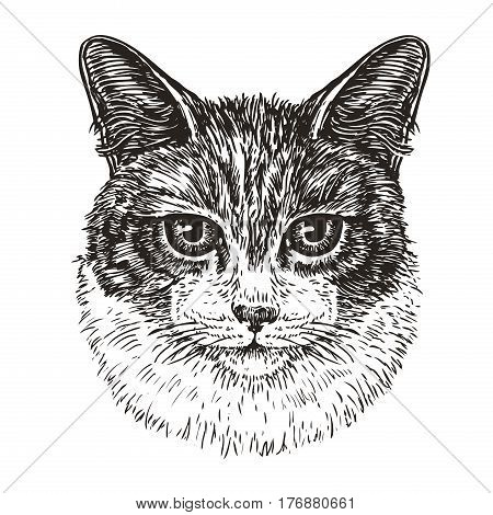 Drawn portrait of cute cat. Animal, kitty, pet sketch. Vintage vector illustration isolated on white background