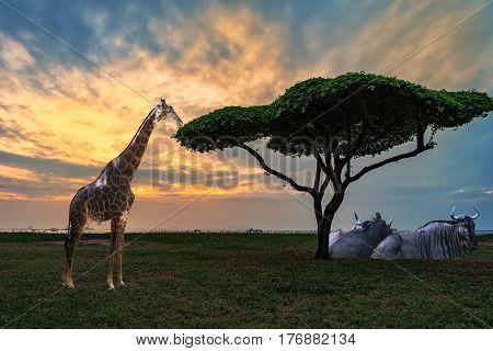 African savannah grasslands at sunset,illustration of Giraffe in a beautiful nature