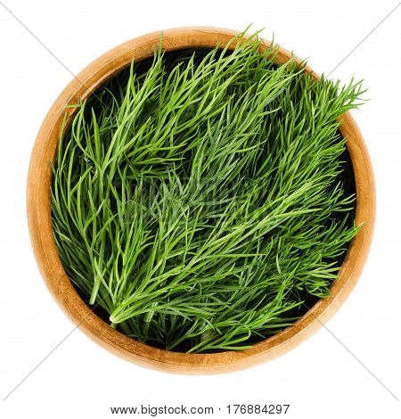 Fresh dill fronds in wooden bowl, also called dill weed. Green leaves of the annual Anethum graveolens, used as herb and spice. Isolated macro food photo close up from above on white background.