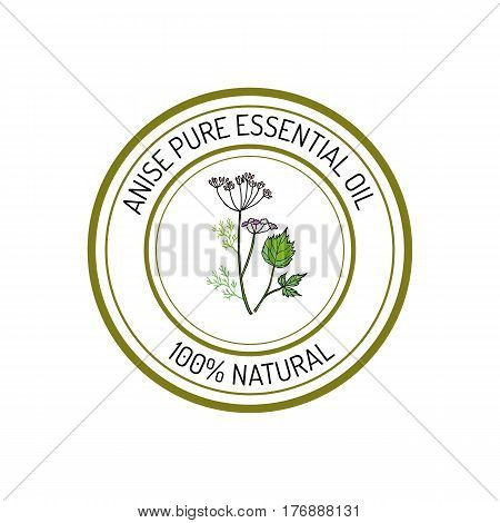 Anise, essential oil label, aromatic plant Vector illustration