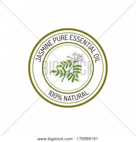 Jasmine, essential oil label, aromatic plant Vector illustration
