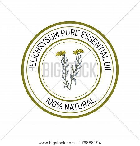 Helichrysum, essential oil label, aromatic plant Vector illustration