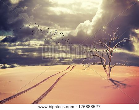 Surreal landscape of a single dead tree and vehicle tracks in a deserted sand dune with a flock of birds silhouetted against a dramatic stormy sky. Drought and climate change concepts. Digital photo manipulation.