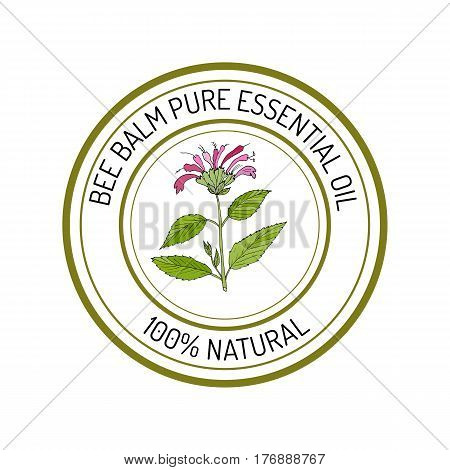 Bee balm, essential oil label, aromatic plant. Vector illustration