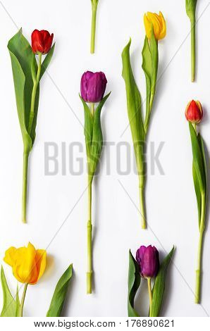 Pattern of multicoloured tulips in full length on white background.