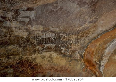 Bhimbetka rock shelters, Madhya Pradesh, India- January 22, 2016: Prehistoric rock painting showing animals in white color at Rock Shelter No. III C-50 or Rock Zoo UNESCO World Heritage Site at Raisen, Madhya Pradesh, India.