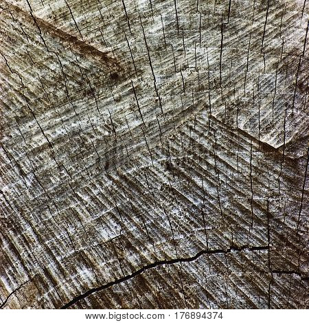 Natural Weathered Grey Tree Stump Cut Texture Large Detailed Old Aged Gray Lumber Background Horizontal Macro Closeup Dark Black Textured Cracked Pattern