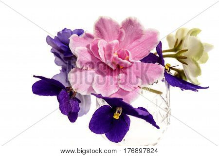 Bright spring floral background with a bouquet of violet pink and white with green flowers violets on a white background