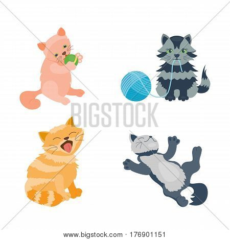 Cat breed cute kitten pet portrait fluffy young adorable cartoon animal and pretty fun play feline sitting mammal domestic kitty vector illustration. Beautiful posing playful paw design.