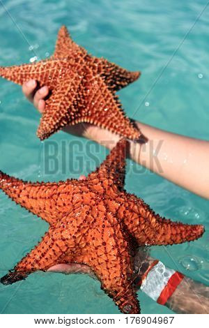 Starfish in a hand, vacation in Dominican Republic