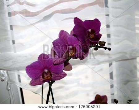 Orschidee, Plant, flora, panicle, tropical, yellow, violet, window, light, nature,