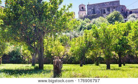 Orange Trees In Garden In Francavilla Di Sicilia
