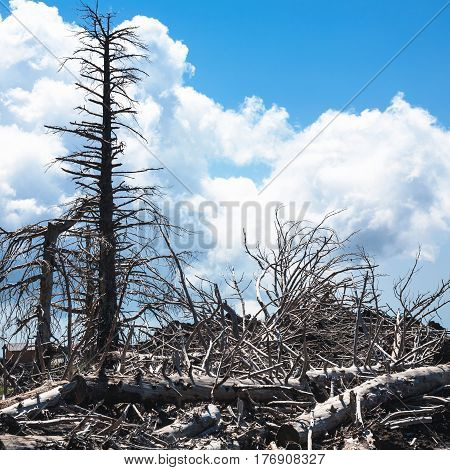 Dried Trees On Slope Of Etna Volcano