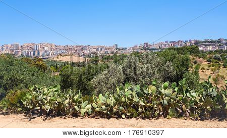 Garden And View Of Agrigento Town In Sicily