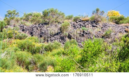 Overgrown Petrified Lava Flow On Volcano Etna