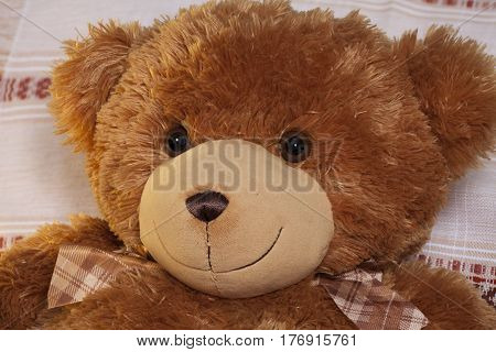 Kind teddy bear plush friend cute toy