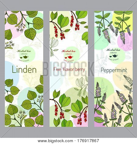 Herbal tea collection. Linden, five-flavor berry, peppermint banner set. Hand drawn vector illustration