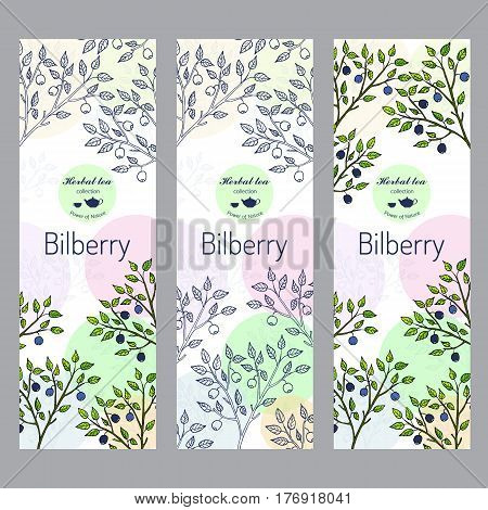 Herbal tea collection. Bilberry banner set. Hand drawn vector illustration