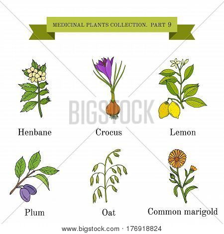 Vintage collection of hand drawn medical herbs and plants, henbane, crocus, lemon, plum, oat, common marigold. Botanical vector illustration