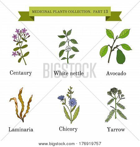 Vintage collection of hand drawn medical herbs and plants, centaury, white nettle, avocado, laminaria, chicory, yarrow. Botanical vector illustration