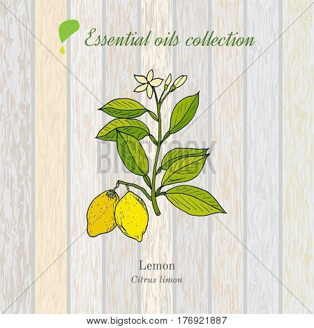 Pure essential oil collection, lemon. Wooden texture background. Vector illustration