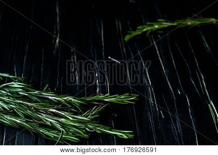 green scented rosemary on dark wooden background. low depth of field
