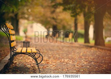 photo of beautiful autumn park full of benches and folliage in wonderful Wroclaw