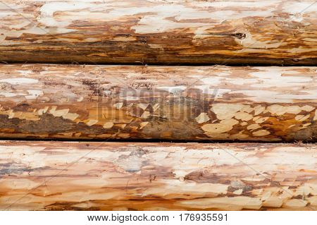 Photo Of Beautiful Bunch Of Felled Trees On The Natural Background
