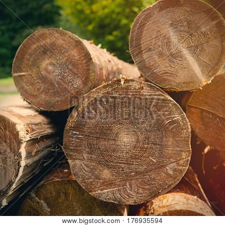 Photo Of Beautiful Bunch Of Felled And Cut Trees On The Trees Background